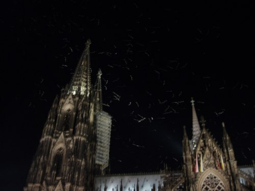 Möwen jagen nachts im Lichtkegel des Kölner Doms