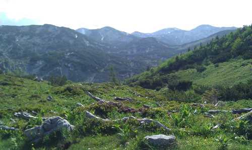 Strauchlandschaft am Feuerkogelplateau